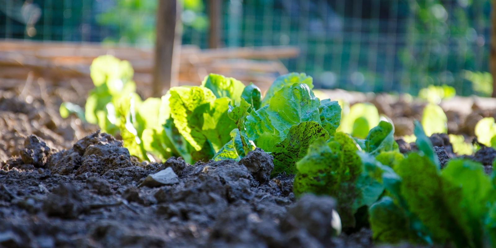 Filiera corta e biologico nel territorio fiorentino: la nostra indagine