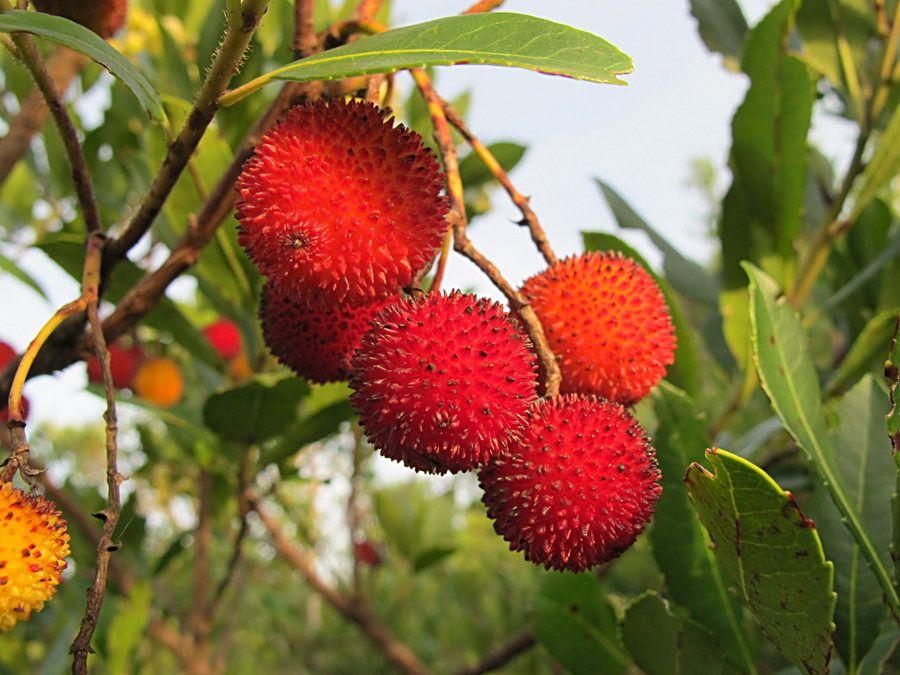 5 Frutti dimenticati che forse non hai mai assaggiato